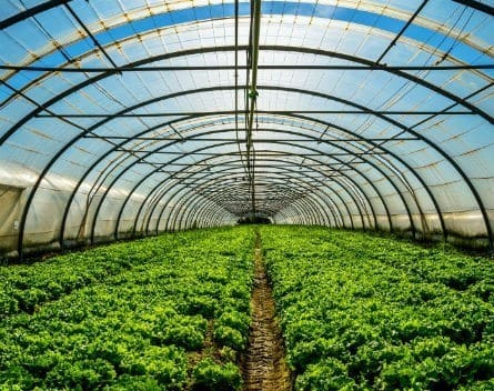 Build a Greenhouse Where Innovation Can Flourish